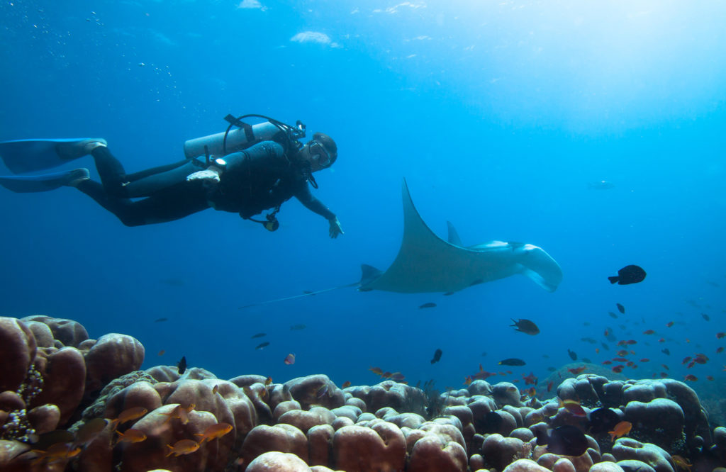 Diver swims with manta ray | Alikai Liveaboard