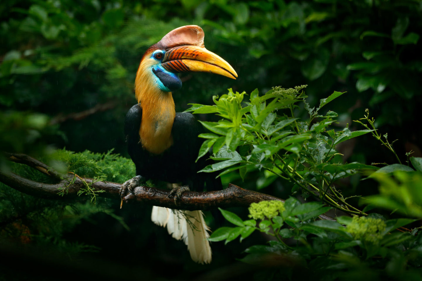 Sailing is often the only way to access the most remote islands home to the rarest tropical birds